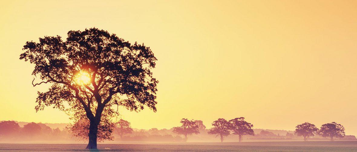 Un albero all'alba